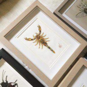 Atelier Noboru, insectes réalisés en broderie « haute couture » au crochet de Lunéville et à l'aiguille.